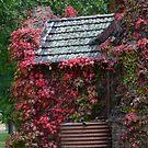 April in Uralla nsw by Judy Woodman