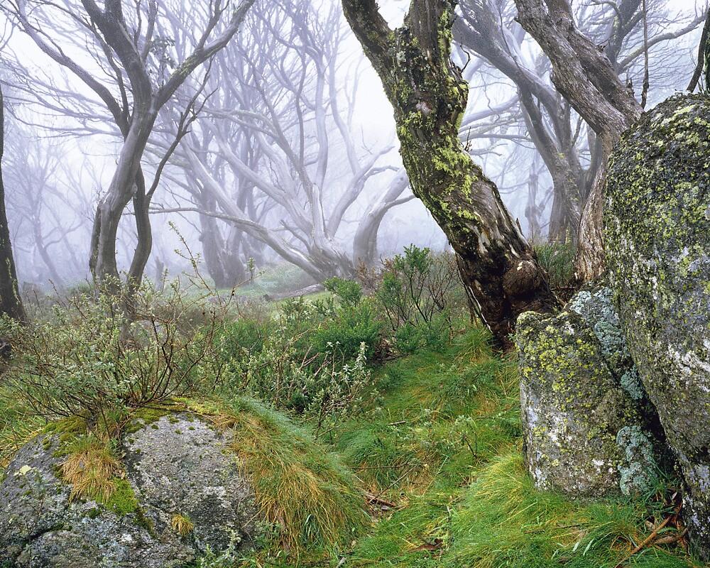 Alpine mist by gerard