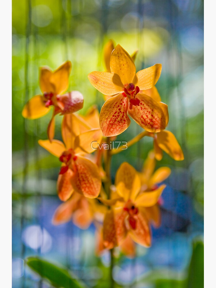 Orchidees flottantes  by Cvail73