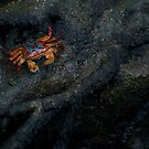 Crabby by Sara Lamond