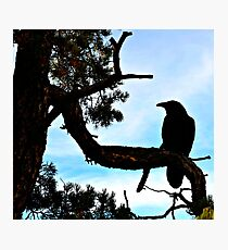 Birds On Grand Canyon's South Rim Photographic Print