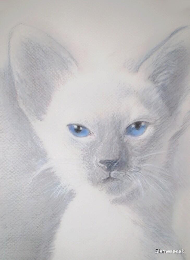Blue Point Kitten by Siamesecat