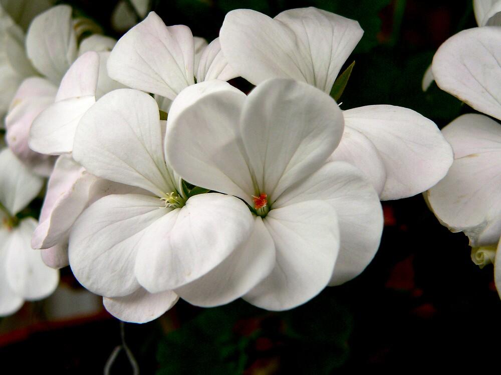 White Delight by Bouzov