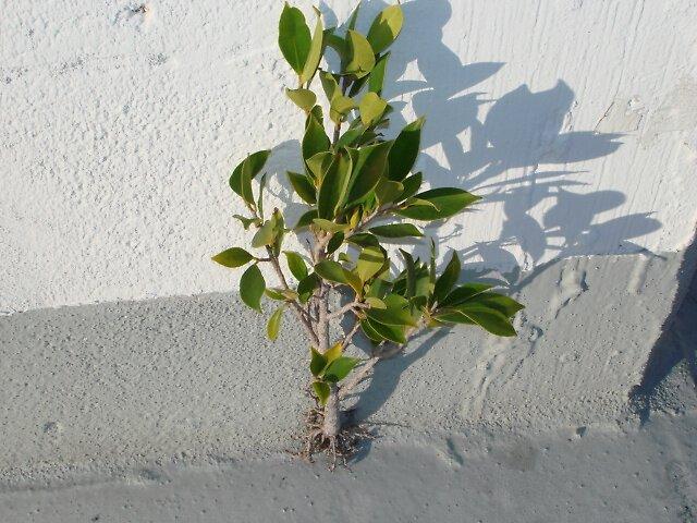 Cemented Plant by Dario  da Silva