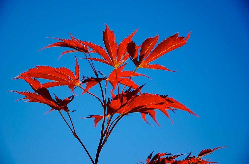 Gotta love autumn by Rowan Stenhouse