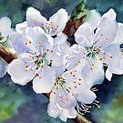 Spring Plum Blossom by Ann Mortimer