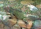 """THINK LIZARDS: """"Camouflaged"""" by Patricia Anne McCarty-Tamayo"""