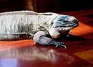 """THINK LIZARD: """"Reflection."""" by Patricia Anne McCarty-Tamayo"""