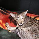 Oriental Cat by Bee78