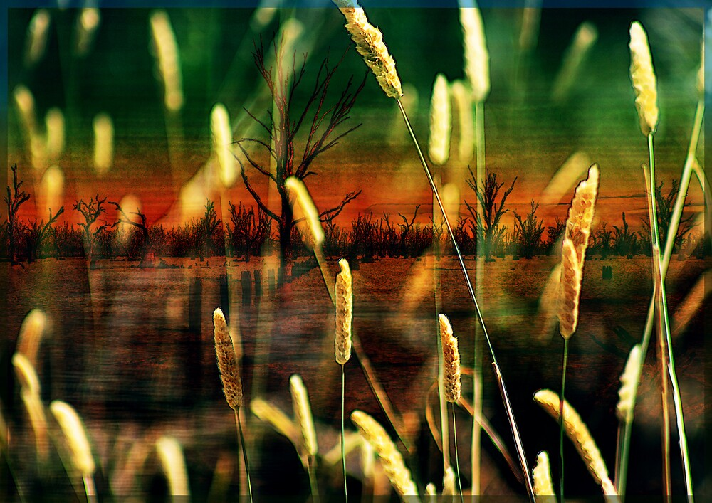 Sunset and grasses by Sabine Spiesser