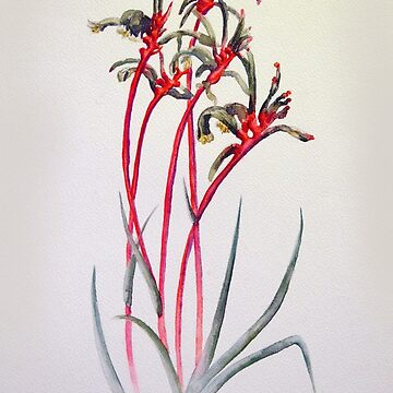 Mangles Kangaroo Paw by MCColyer