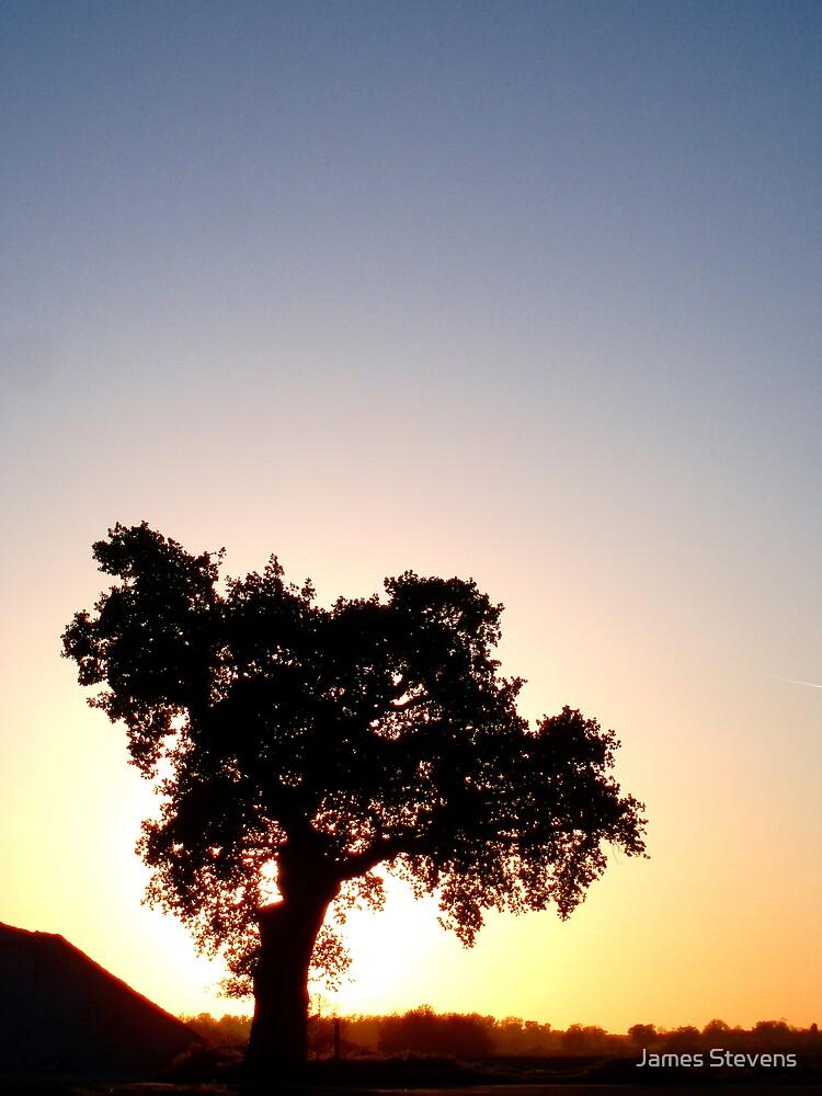 """The Oak Down the Lane"" by James Stevens"