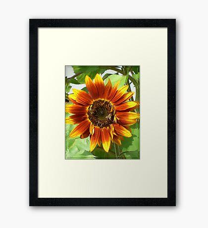 Bees on Red Sunflower Framed Print