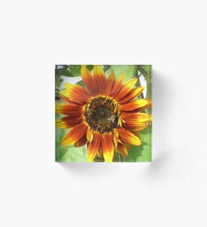 Bees on Red Sunflower Acrylic Block