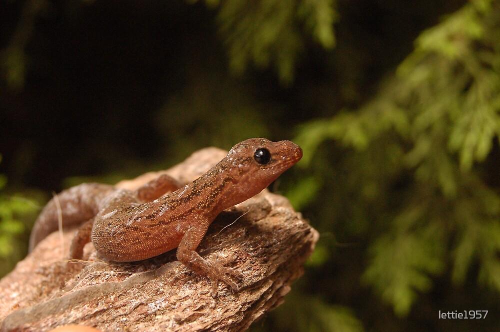 Gecko - New Friend  by lettie1957