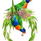 Rainbow Lorikeets by Pip Abraham