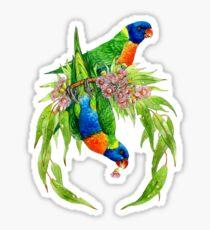 Rainbow Lorikeets Sticker