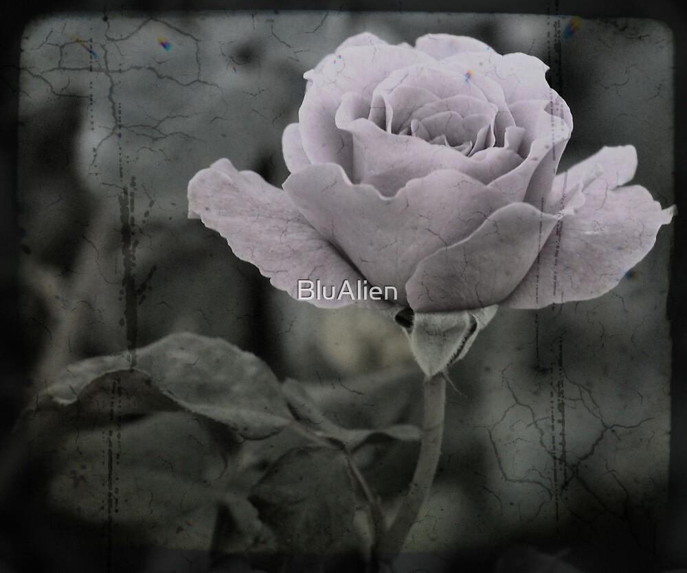 Concrete Rose by PixelBoxPhoto