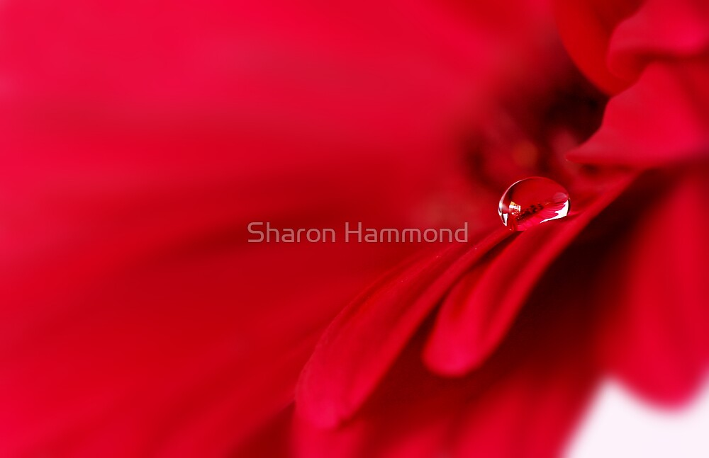 Drop by Sharon Hammond