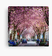 Cherry Blossom Street #1- Bonn, Germany Canvas Print