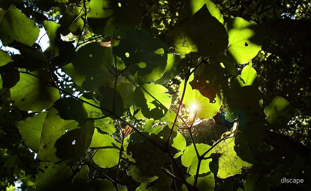 Backlit leaves by dlscape