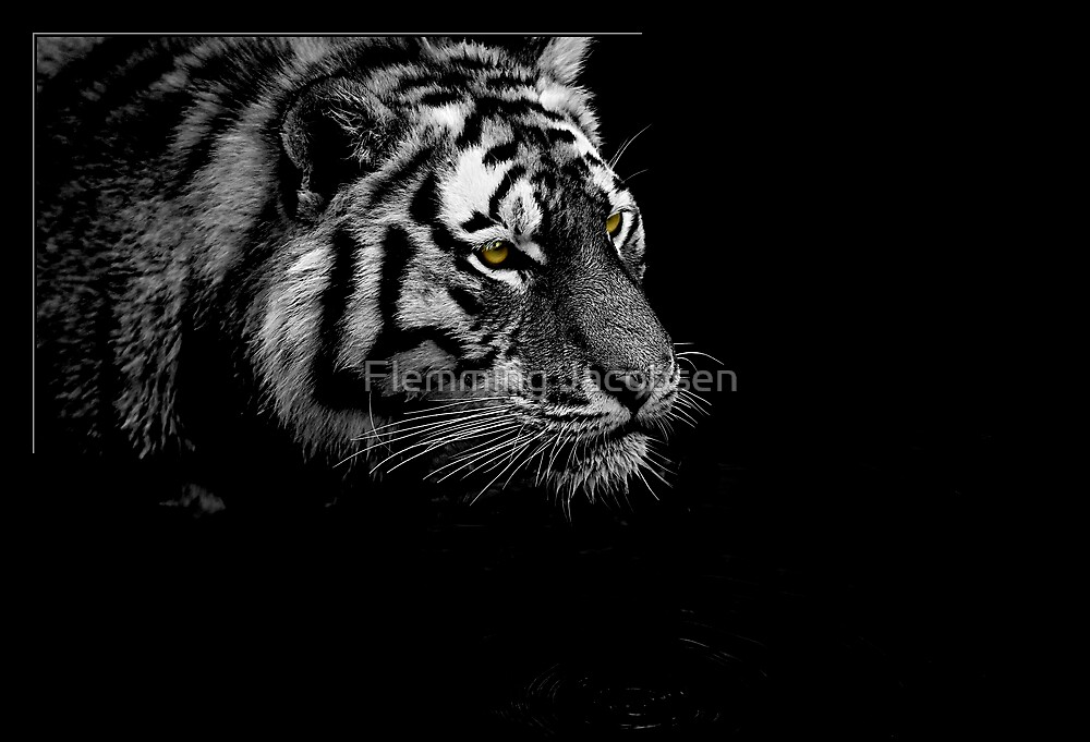 Tiger hunting  by Flemming Jacobsen