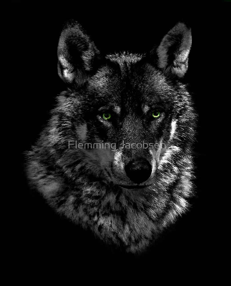 Wolf portrait by Flemming Jacobsen