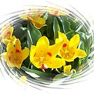 Spring Tulips For Mom by Marie Sharp