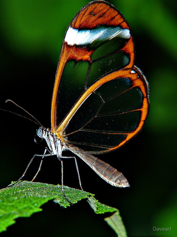 Glass wing by Daveart