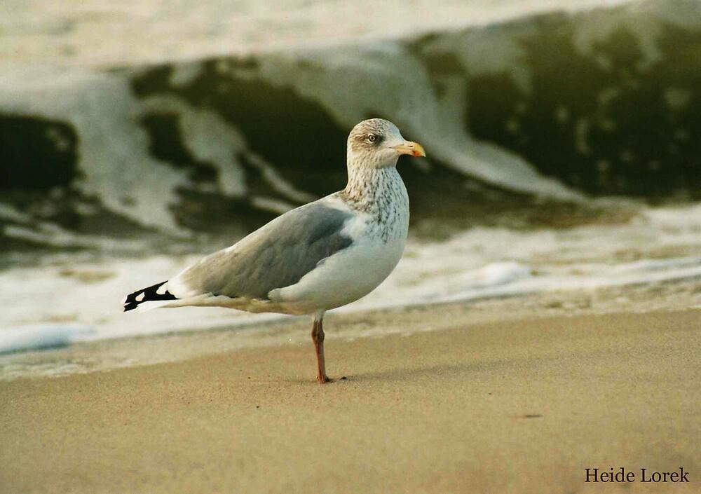 Waiting Seagull by Heide  Lorek