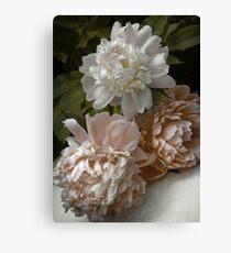 Vintage Pale Pink Peonies Canvas Print
