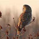 Dusk On A Great Gray Owl by DigitallyStill
