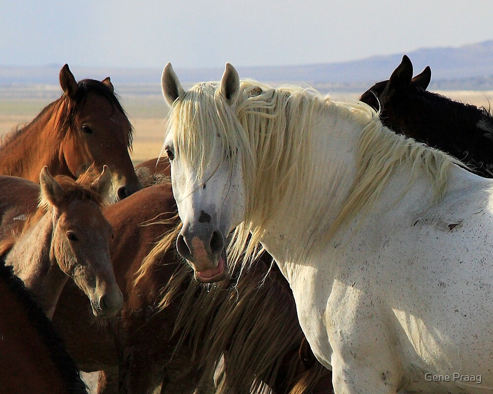 The White Stallion by Gene Praag