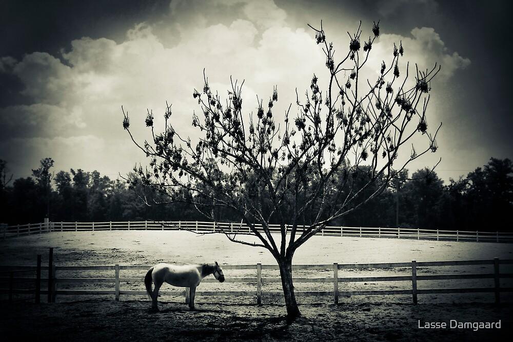 Solitude by Lasse Damgaard