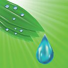 green leaves and water drops by valeo5
