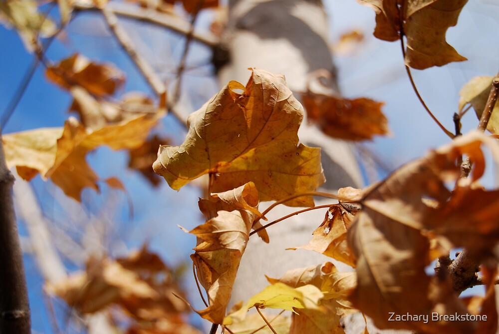 Blue Autumn by Zachary Breakstone