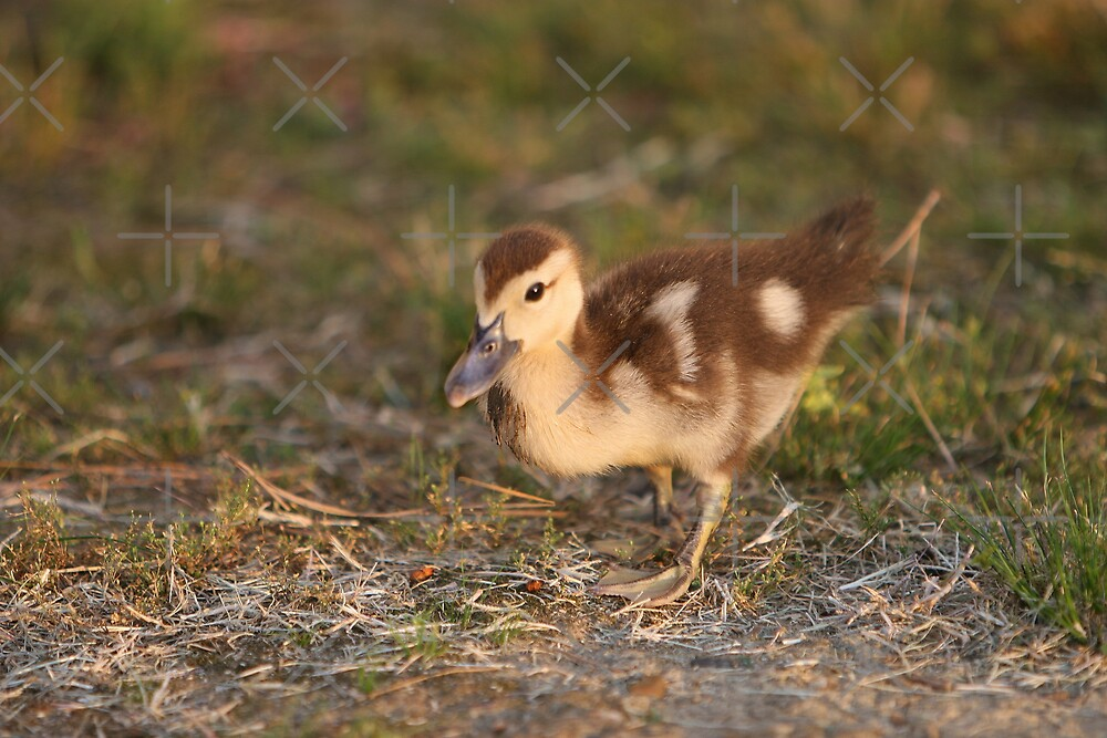 Chick by Lisa Putman