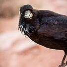 Curious Crow by Colin Tobin