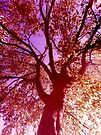 Colourful Beech by SexyEyes69