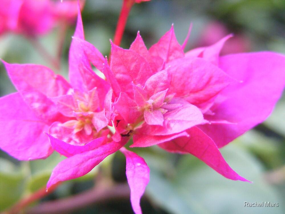 Flower2 by Rachel Mars