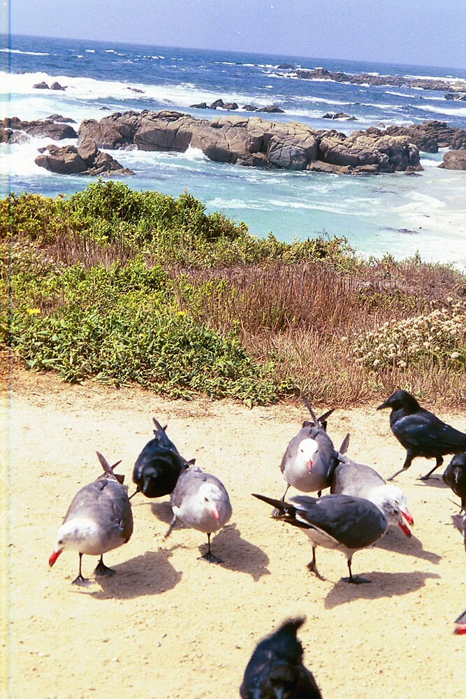 Birds of a Feather by Ann Palmieri