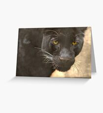 Keen Observer Greeting Card