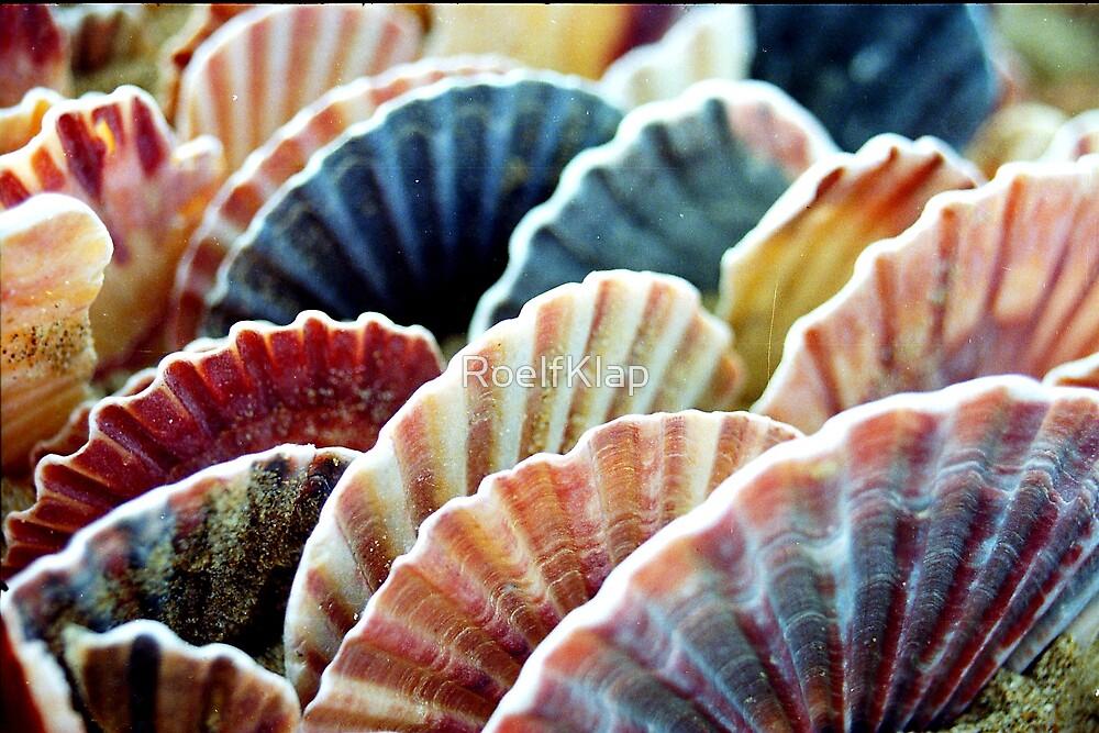 scallop shells by RoelfKlap
