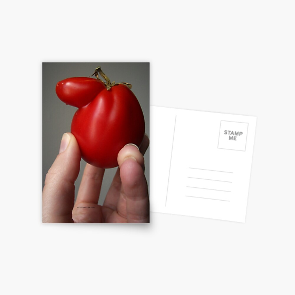 Of Veggie Weenies - Tomato Postcard
