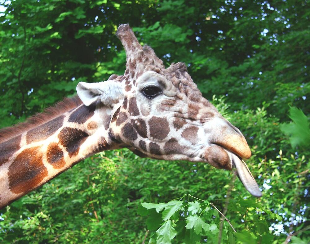 Giraffe by Beaner
