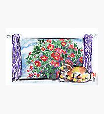 Sumi Kitty and Camellias  Photographic Print
