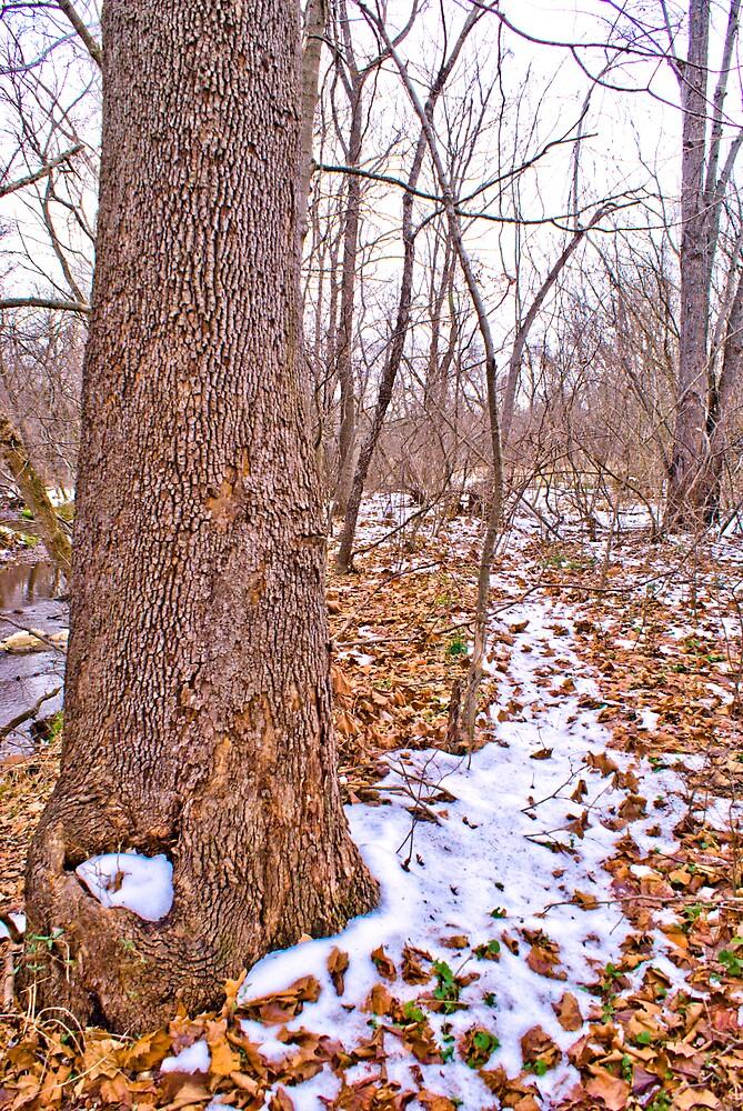 Winter Walk #1 by Rod  Adams