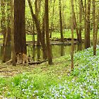 Woodland Spring  by lorilee