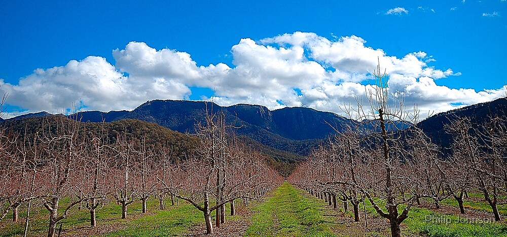 Awaiting the New Season - Buckland Valley , Victoria Australia by Philip Johnson