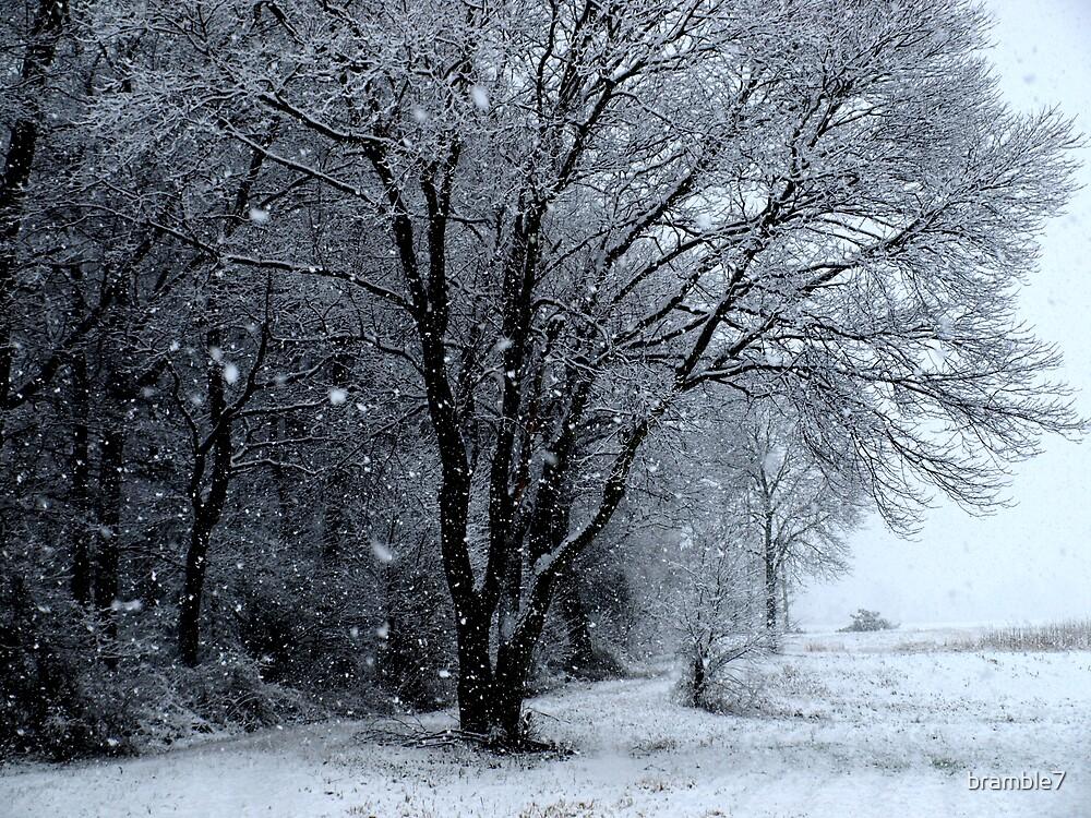 snow solitude by bramble7